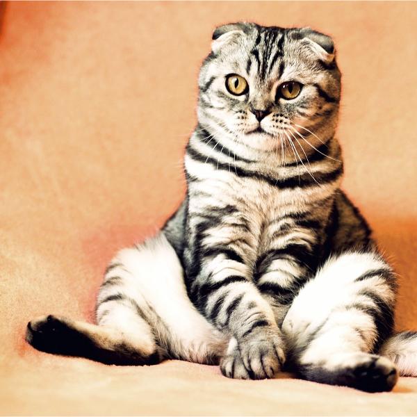 ¿Cómo quitar el olor a orina de gato?