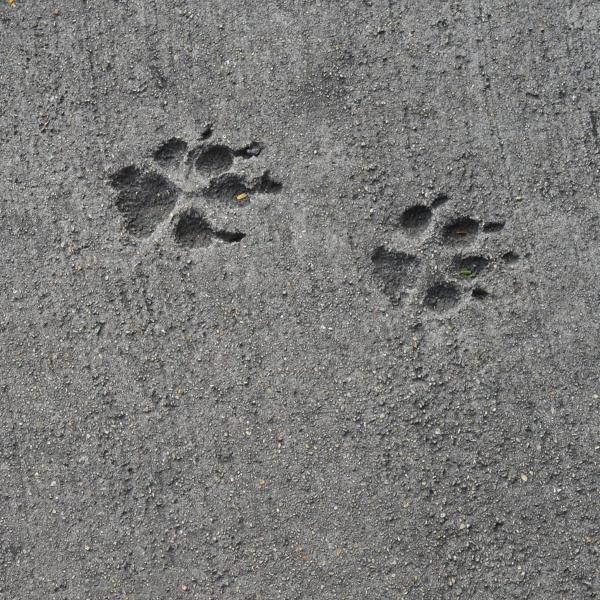 ¿Cómo quitar olor a orina de perro en cemento?